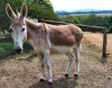 A donkey is 1 year pregnant! Plus more facts
