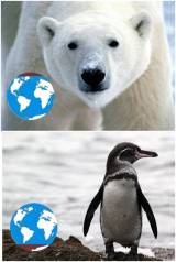 No penguins in the north pole, no polar bears in the south pole.