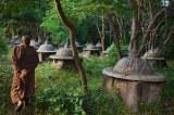 Elephants: facts, cemeteries,poaching